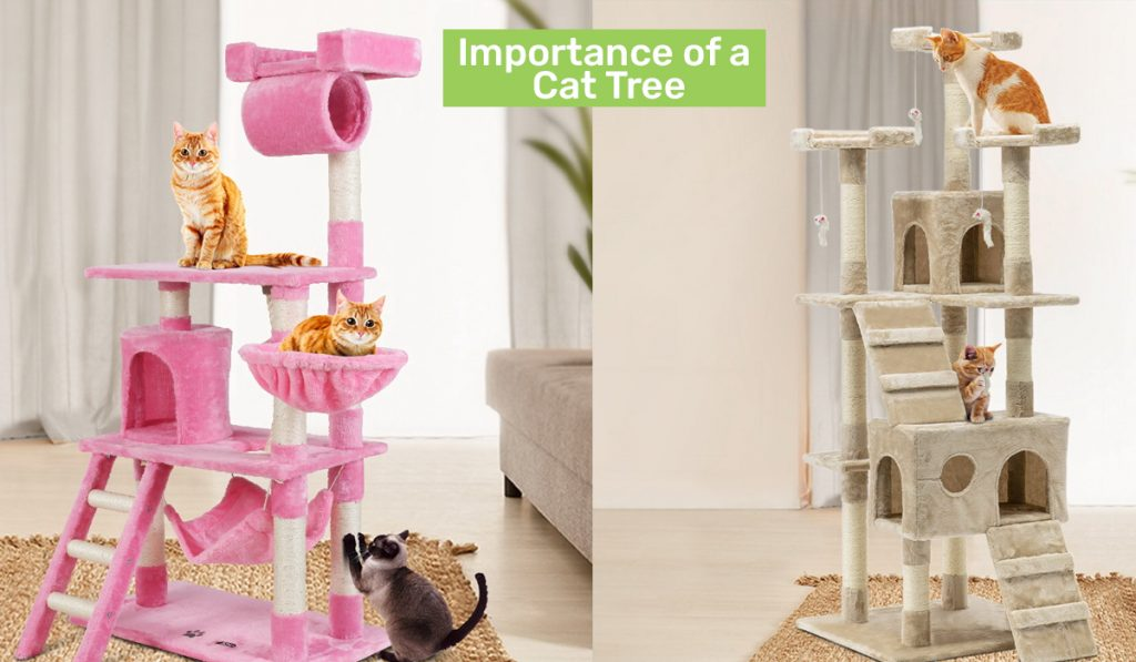 Importance of a Cat Tree