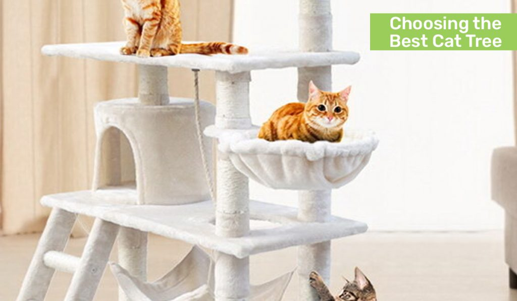 Choosing the Best Cat Tree at Pay Later Alligator